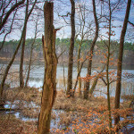 Toter Baum am Templiner See
