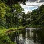 Natur am Templiner Kanal