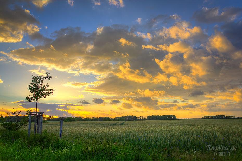 Sonnenuntergang am Neuplachter Weg im Juni