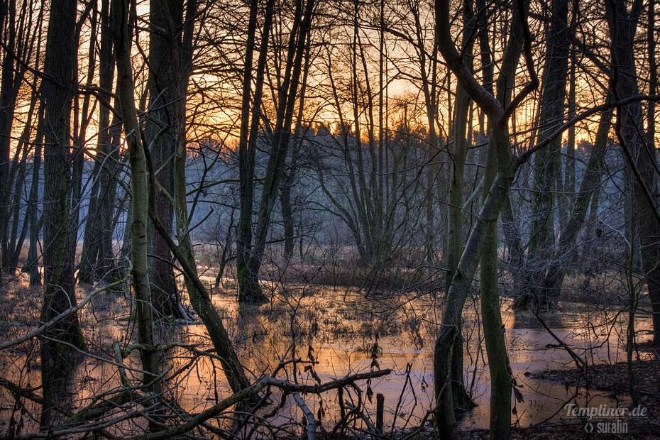 Morgenstimmung bei Sonnenaufgang in der Nähe des Lübbesees