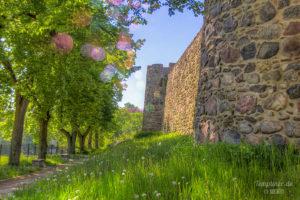 Wiese an der Stadtmauer