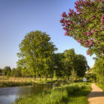 Flieder am Kanal im Mai
